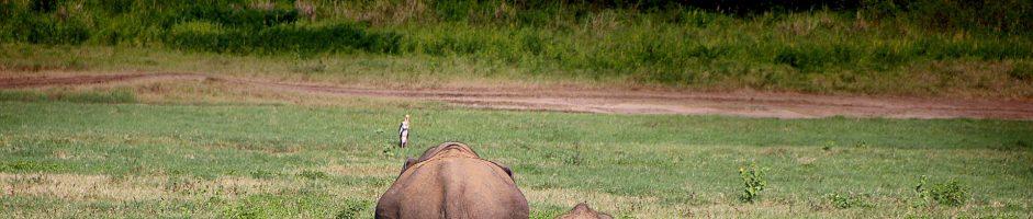 Hoe eet je een olifant?